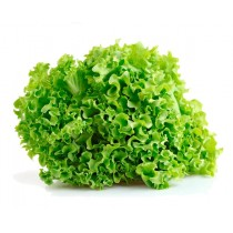 Lettuce Green (Batavia) You