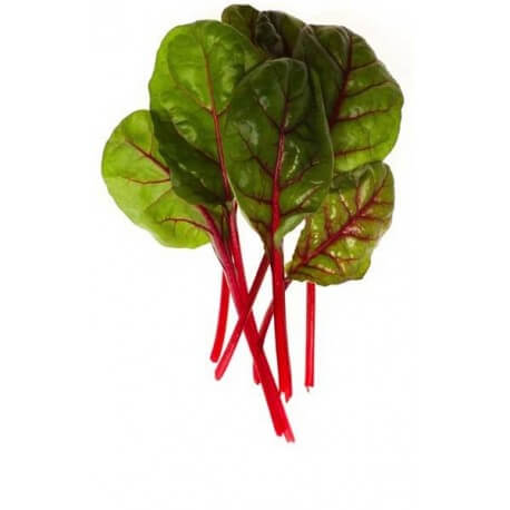 Swiss Chard Red Green